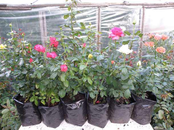 пакеты для выращивания цветов и декоратывных растений купить оптом от Клиома Сервис