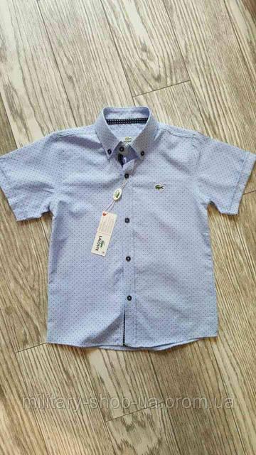 Голубая рубашка Lacost короткий рукав