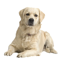 Корм для взрослых собак Acana (Акана)