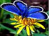 "Набір для малювання стразами ""Синя метелик"" (алмазна мозаїка)"
