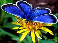 """Набір для малювання стразами """"Синя метелик"""" (алмазна мозаїка), фото 1"""
