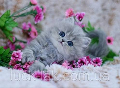 Алмазная вышивка, котик в цветах, 40х30 см