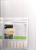 Лювена семена кукурузы