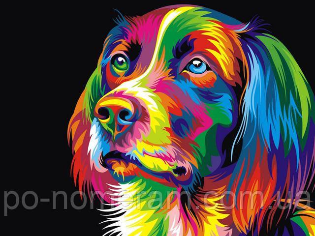 Раскраска по номерам радужный пес