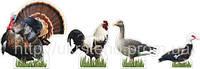 Набір Домашні тварини (2307)