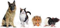 Набір Домашні тварини (2309)