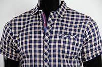 Рубашка мужская ANG 40350/40355 норма и батал