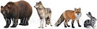 Набір Дикі тварини (2308)