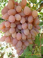 Черенки  винограда  (  6 наимен. ) Бажена,Юлиан, Румба и др.