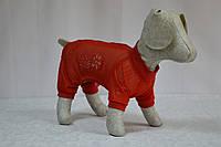 Комбинезон для собак Лето, фото 1