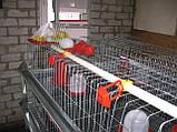 Труба пластикова для напування 2 м Труби для клітиок Для ніпельних поїлок, фото 7