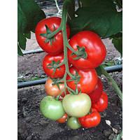 Насіння томату Кларабелла F1/Clarabella RZ (1000 н)