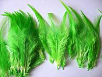 Перо петушиное , 9-15 см, ярко-зеленое