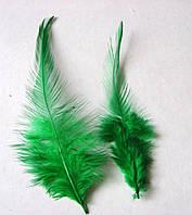 Перо петушиное , 9-15 см, зеленое