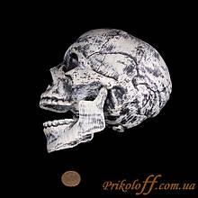 Череп  на Хеллоуин с подвижной челюстю