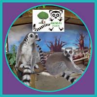 ВДНГ Контактный зоопарк