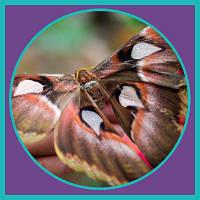 ВДНГ Планета  бабочек