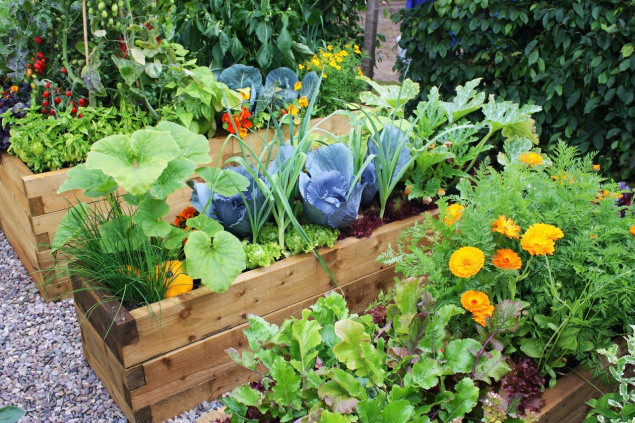 Комплексные средства от садовых вредителей