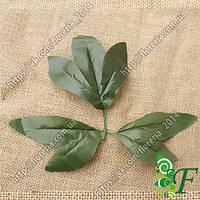 Листья пиона за 10шт