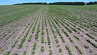 Моніторинг якості посівів, фото 1