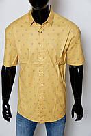 b8264a9a8ca5 Мужская рубашка Gucci в Украине. Сравнить цены, купить ...
