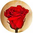 Три долгосвежих розы Алый Рубин в подарочной упаковке, фото 3