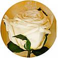 Три долгосвежие розы Белый Бриллиант в подарочной упаковке, фото 3