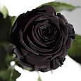 Три долгосвежие розы Черный Бриллиант в подарочной упаковке, фото 2