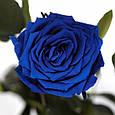 Букет долгосвежих роз Синий Сапфир, фото 2
