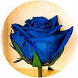 Букет долгосвежих роз Синий Сапфир, фото 4