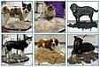 Фурминатор для кошек и собак 6,8 см, фото 3