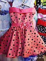Детское нарядное платье Стиляга. Планочка коралл черный в горох. 6 лет.