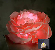 Пион светлячок персиковый 20 см