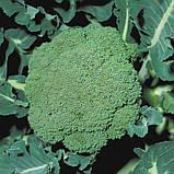 Семена капусты брокколи ПАРТЕНОН F1, 1000 семян, фото 2