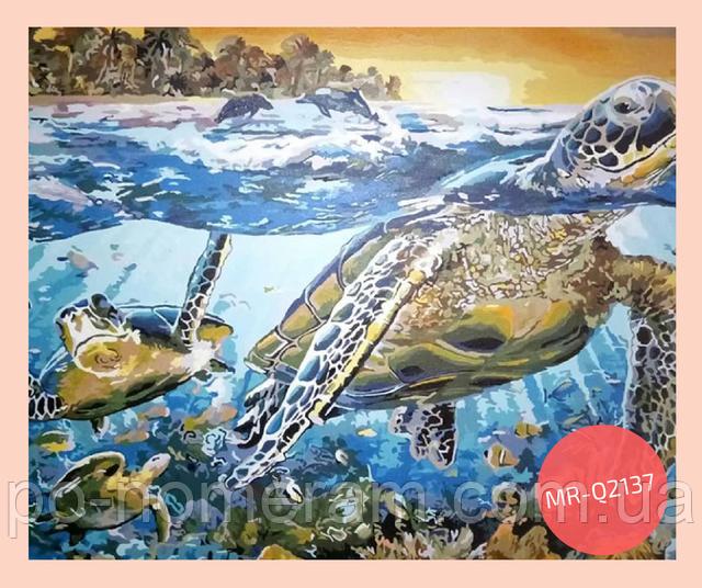 нарисованная раскраска по номерам черепаха