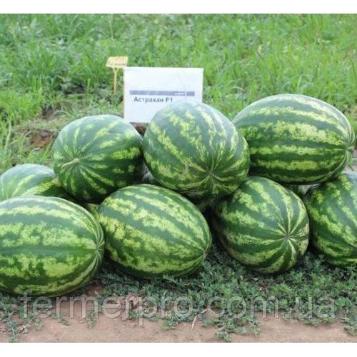 Семена арбуза Астрахан F1 \ Astrahan F1 Syngenta 1000 семян