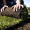 Укладка рулонного газона по всем правилам