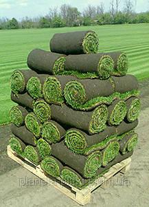 Рулонные газоны засеиваются различными по составу травосмесями: тенеустойчивый, спортивный, универсальный, партерный