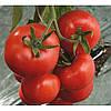 Семена томата Ивет F1 \ Ivet F1 500 семян Syngenta