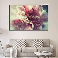 2550 Bi-colored camellia