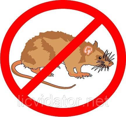 Боротьба з мишами на виробничих площах в Херсоні та області