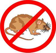 Борьба с мышами на производственных площадях в Одессе и области
