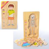 Деревянная игрушка Гардероб MD 1127 (18шт) 2вида, в кульке, 17-29,5-2см