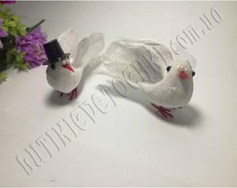 Пара голубів