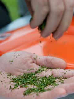 Мульчирование почвы и виды газонокосилок