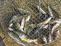 Анализируем рыбалку на 29, 30 октября.