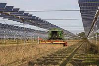 Агровольтаика: как повысить урожайность с помощью солнечных панелей