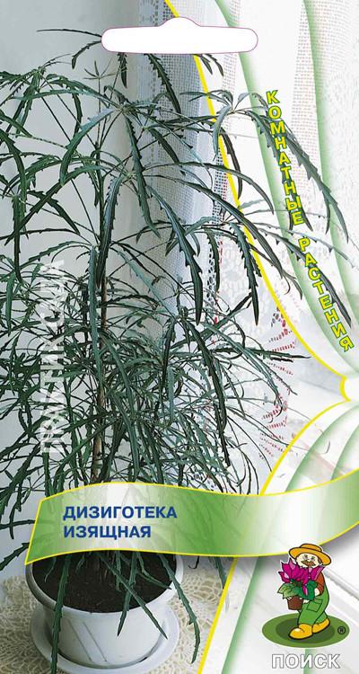 Дизиготека - особенности выращивания и ухода за кустарником (150 ...   750x400