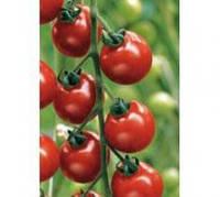 Томат индетерминантный красный (высокорослый)