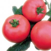 Томат идетерминантный розовый (высокорослый)
